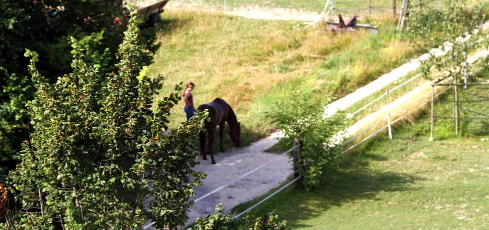 Pferdeboxen im Bucheggberg, Schmärleiben AG, Hessigkofen
